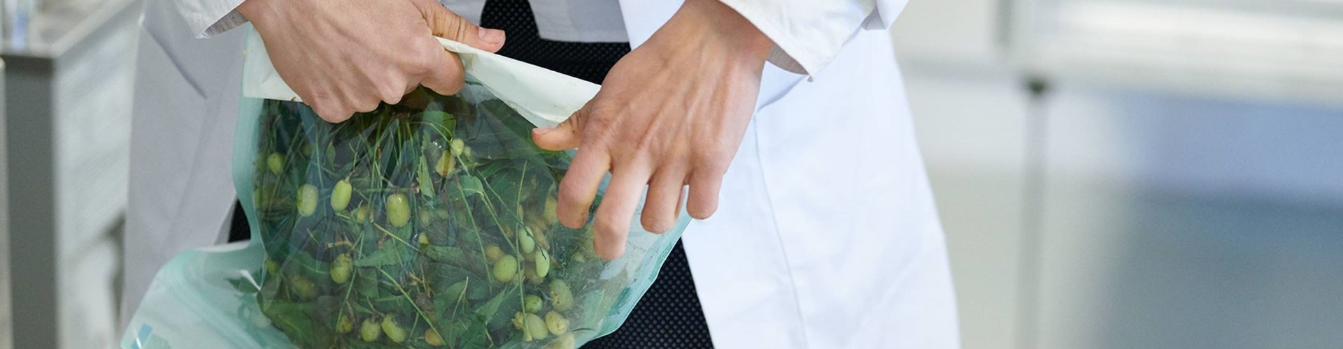 Small herbs in a sealed bag being held by a Farm2Future employee
